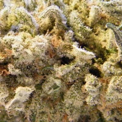 Dope Smoker – Marijuana Review