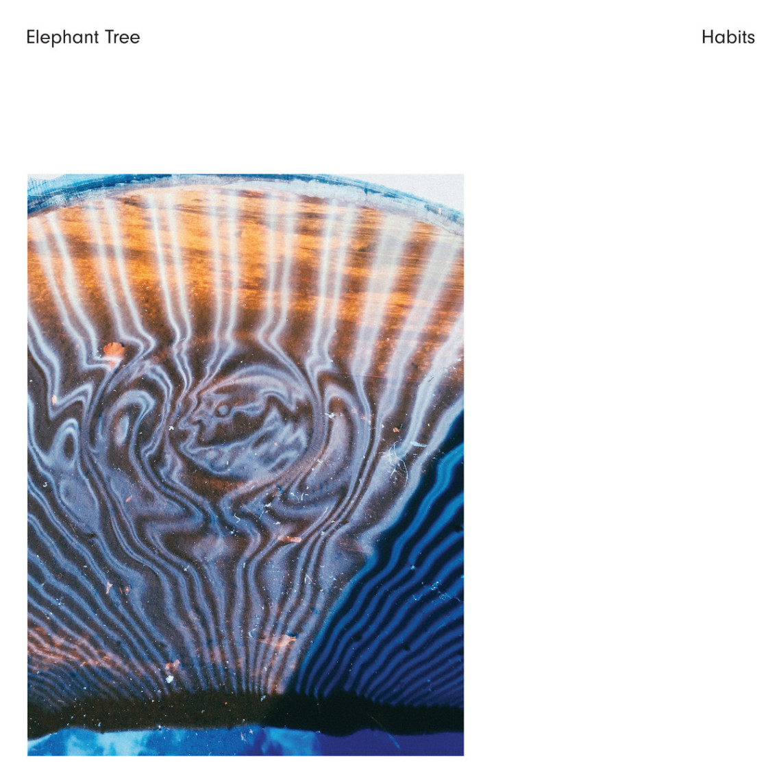 Elephant Tree – Habits Review
